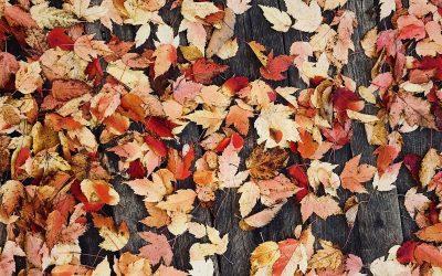 ¿Quieres darle un aire renovado a tu hogar en otoño?